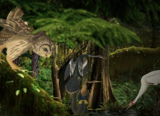 """""""Audubon Animated"""" at the Bell Museum"""