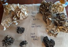 """Check out hen of the woods foraging anecdotes and tips from the blog """"So I Gather."""""""